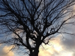 Bare-Leaved Tree with Sky and Clouds