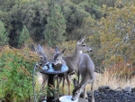 Deer at the Watering Hole