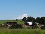 Farm-Scenes-June-2014-2