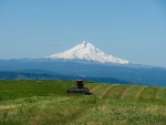 Swathing-alfalfa-under-Mt.-Hood