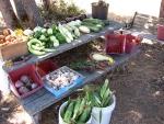 II Harvest