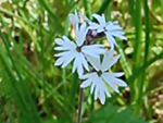 Spring photo - Prairie Star (small)