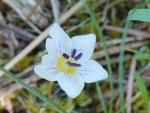 Spring photo - unknown wildflower