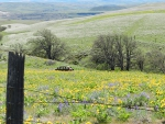 xSpring photo - wildflowers, old car, gorge - Jeff