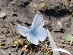 Summer photo - blue ___ butterfly