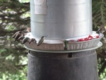 Industrial-size Hummingbird Feeder