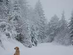 Jedi snowy trees & road 12 20 10
