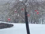 winter_Festive Lilac Tree