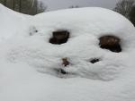 Winter wood pile art - 2-23-19 - Jocelyn Weeks